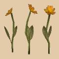 floweryellow.png