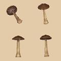 mushroomordinary.png